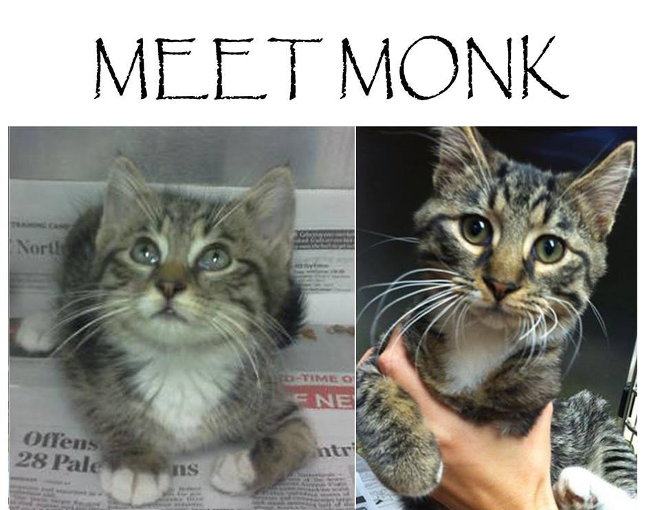 monkf
