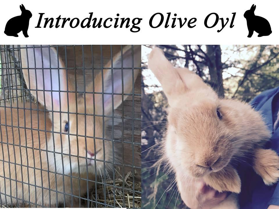 oliveoyl