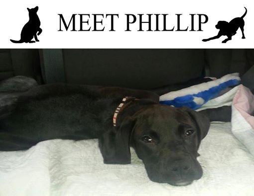phillip