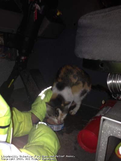 cat_rescue_2